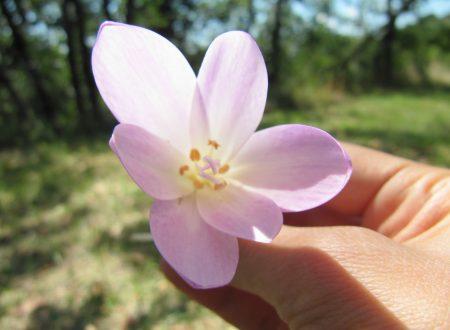 """""""La delicatezza di un fiore"""""""