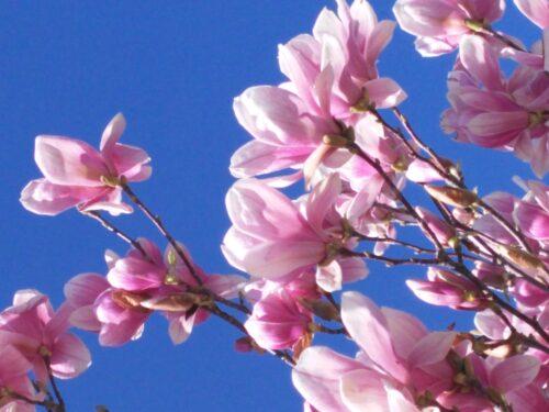Primavera nel Cuore